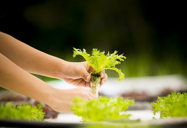 Maximizing Your Hydroponic Nutrients